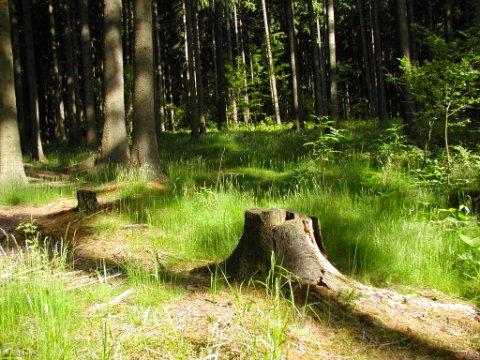 http://www.hlinecko.cz/menu_priroda/priroda/lesy.jpg
